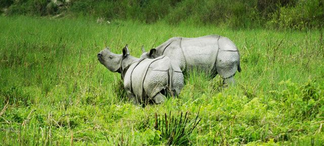 Rhino at Kaziranga National Park - Assam