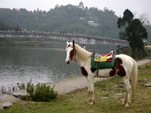 Horse with mirik bridge in background