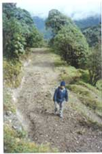 Walking towards Sandakphu