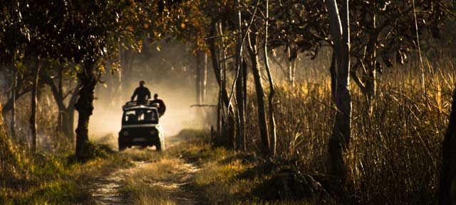 Jeep Safari in Manas National Park - Assam